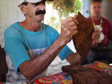 Work in Tobacco Farm